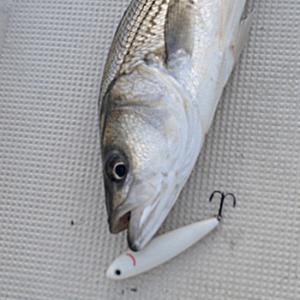 Lake Texoma Fishing Guide Prices